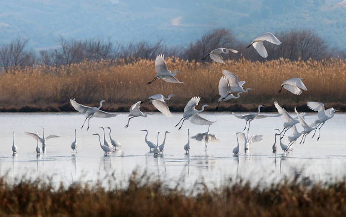 A flock of birds in the Messinia region of the Peloponnese © courtesy of Costa Navarino