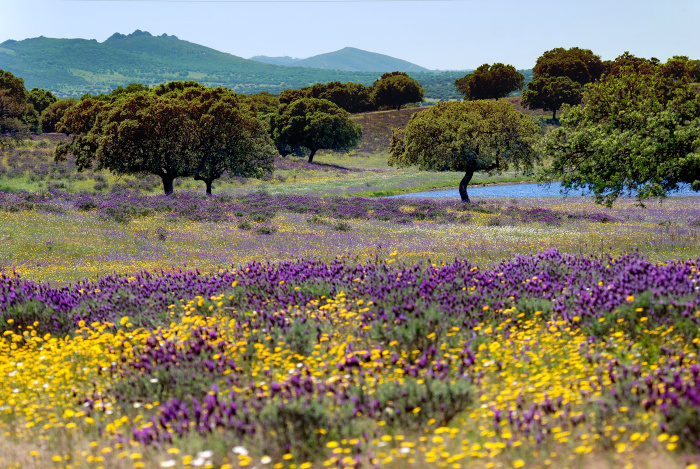 Extremadura's beautiful countryside and lesser known attractions make it perfect for getting off the beaten track © Jacques van Dinteren - Getty Images