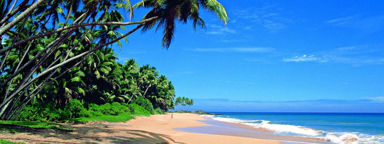 Sri Lanka Muschi Fotos und